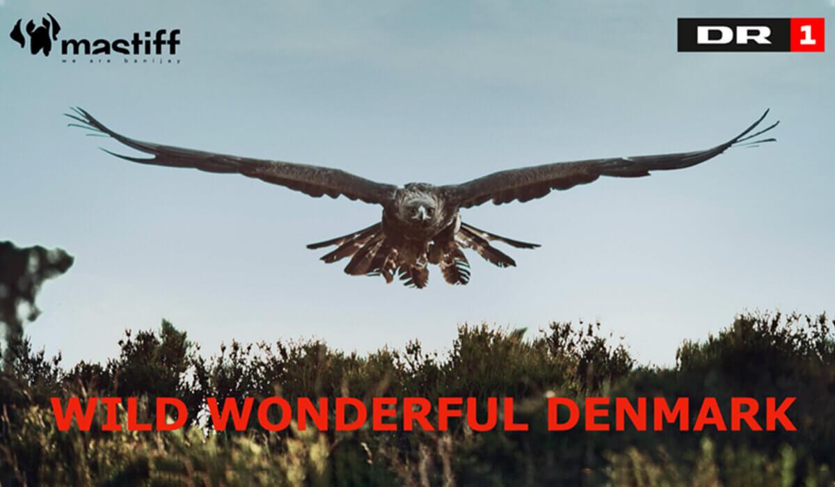 Lov group - Wild wondeful denmark